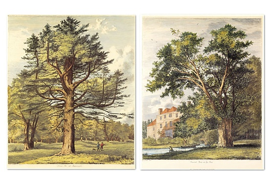 Jacob G. Strutt, Trees II, Set of Two on OneKingsLane.com